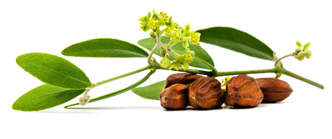 almaye-ingredient-jojoba